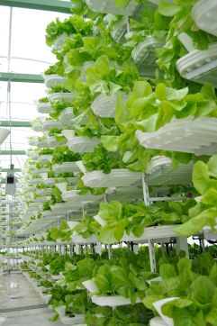 This is solarpunk (https://en.wikipedia.org/wiki/Vertical_farming)