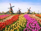 Dutch-Landscape